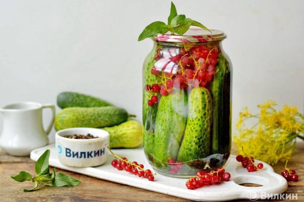 Огурцы, консервированные с соком красной или белой смородины