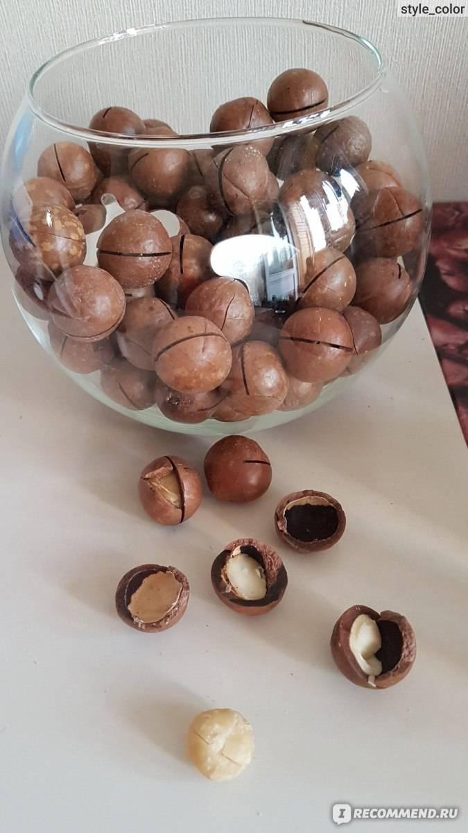 Как вырастить арахис в домашних условиях в горшке на окне: можно ли посадить самому семена и когда, какой нужно обеспечить уход земляному ореху на подоконнике?